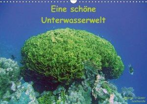 Eine schoene Unterwasserwelt - Bauch Dorothee