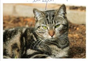 Postkarte: Katze (ungelaufen)