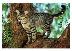 Postkarte: Katze auf Baum (ungelaufen)