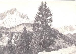 AK SW Alpspitze und Zugspitze um 1960