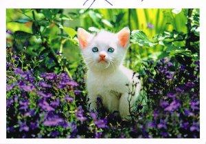 Postkarte: Katzenbaby (Katze) (ungelaufen)