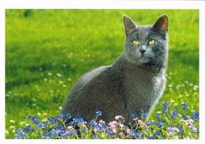 Postkarte: Katze (Russisch Blau Hauskatzze) (ungelaufen)