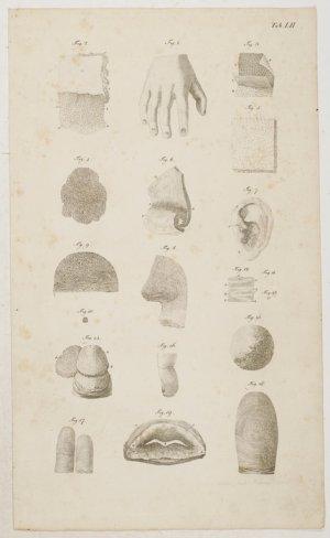 """Anatomische Tafeln: Sinnes-Werkzeuge: Die Haut"""" (Loder Justus ..."""