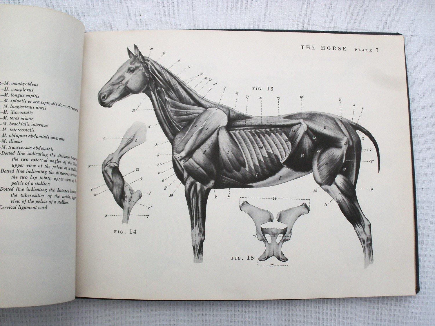 An Atlas Of Animal Anatomy For Artists W Ellenberger H Buch