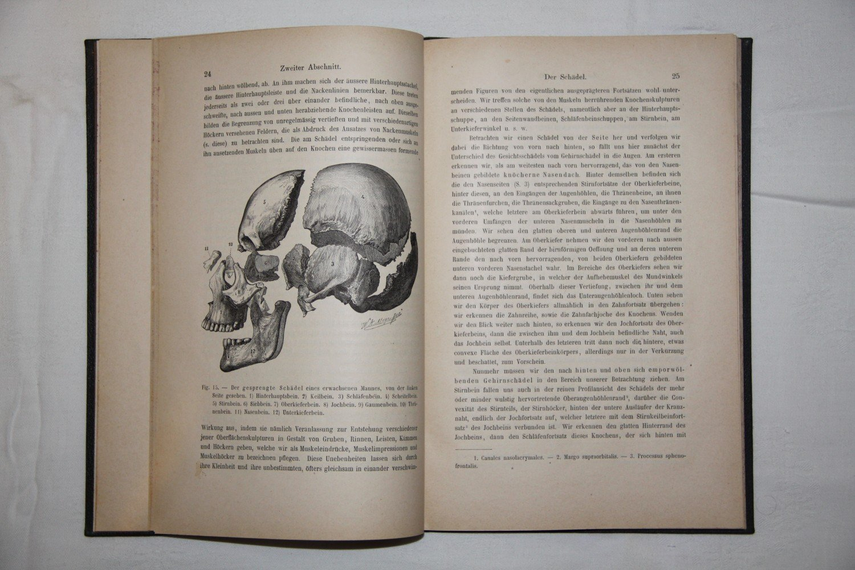 Die systematische und topographische Anatomie des menschlichen ...