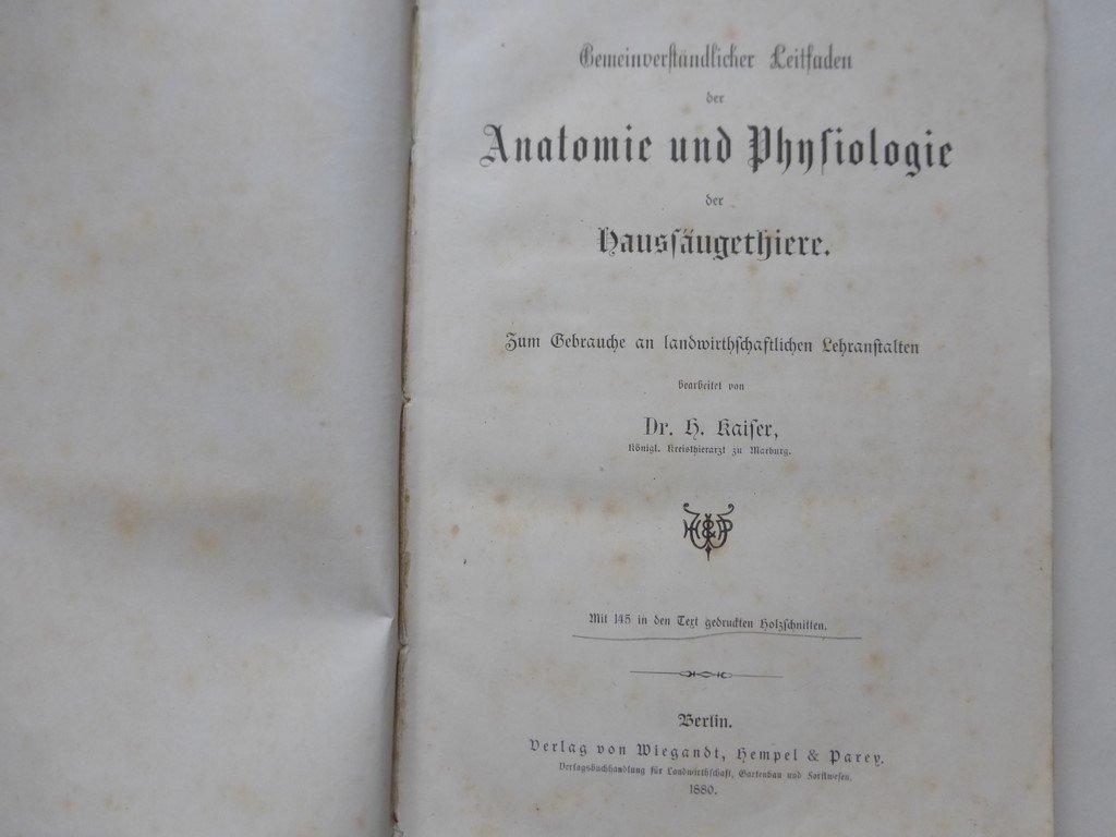 Schön Hengst Reproduktive Anatomie Zeitgenössisch - Anatomie Von ...
