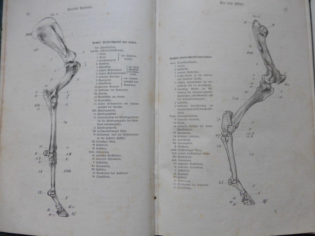 Niedlich Anatomie Des Trommelfells Zeitgenössisch | JHE Auctions