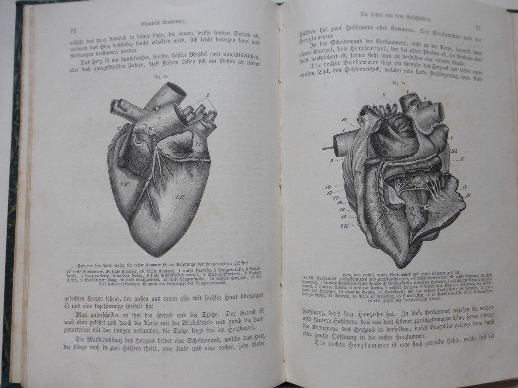 Atemberaubend Prinzipien Der Anatomie Tortora Galerie - Anatomie Von ...