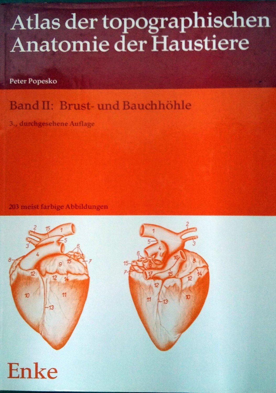 Fein Veterinär Anatomie Der Haussäugetiere Galerie - Physiologie Von ...