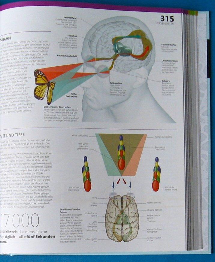 Beste Anatomie Und Physiologie Websites Fotos - Menschliche Anatomie ...