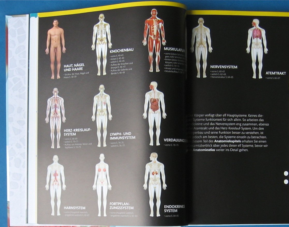 Fantastisch Anatomie Und Physiologie Körper Galerie - Menschliche ...