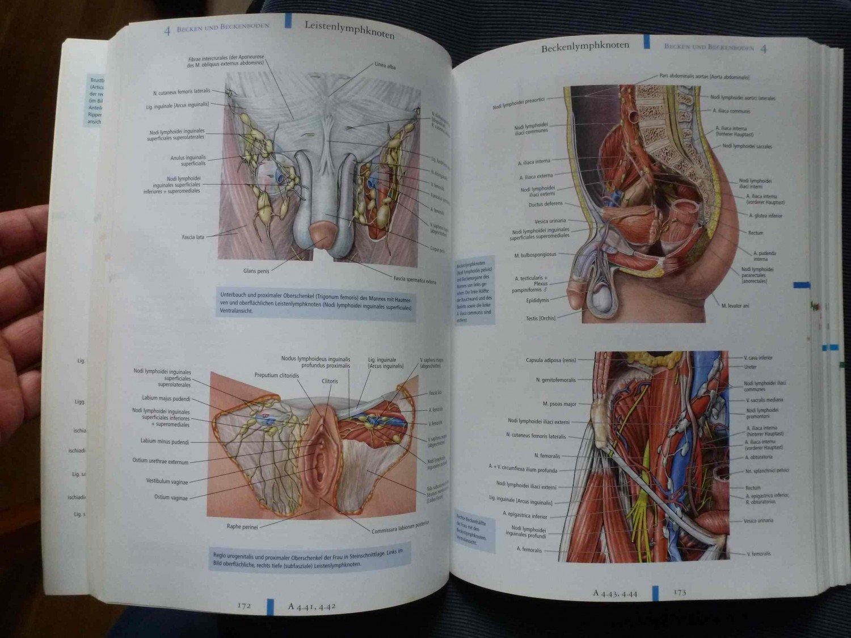 Charmant Menschliche Anatomie Und Physiologie Marieb 9. Auflage ...