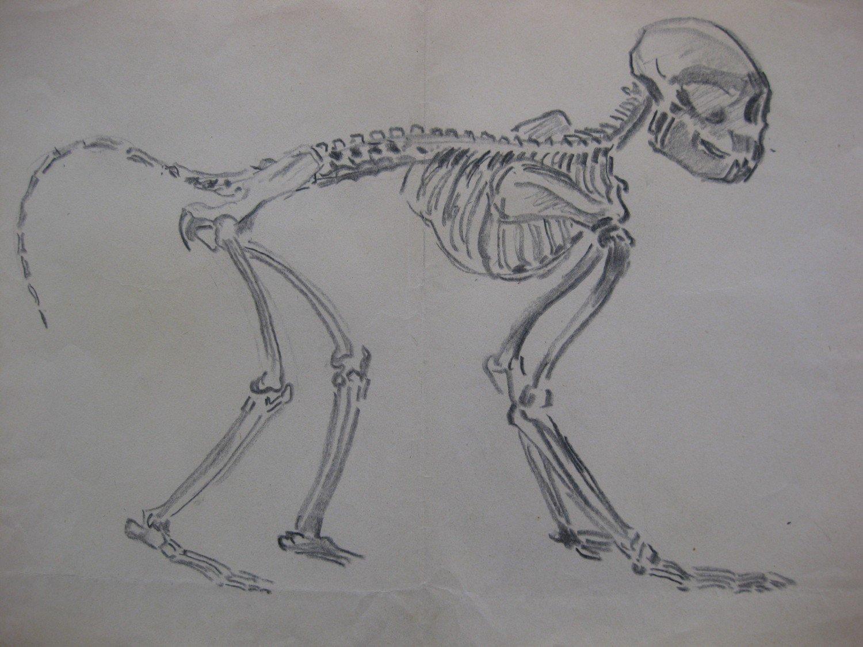 Großartig Anatomie Und Physiologie Skriptum Ideen - Anatomie Von ...