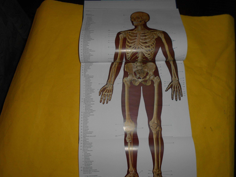 Berühmt Atlas Der Menschlichen Anatomie Netter 5. Auflage Fotos ...