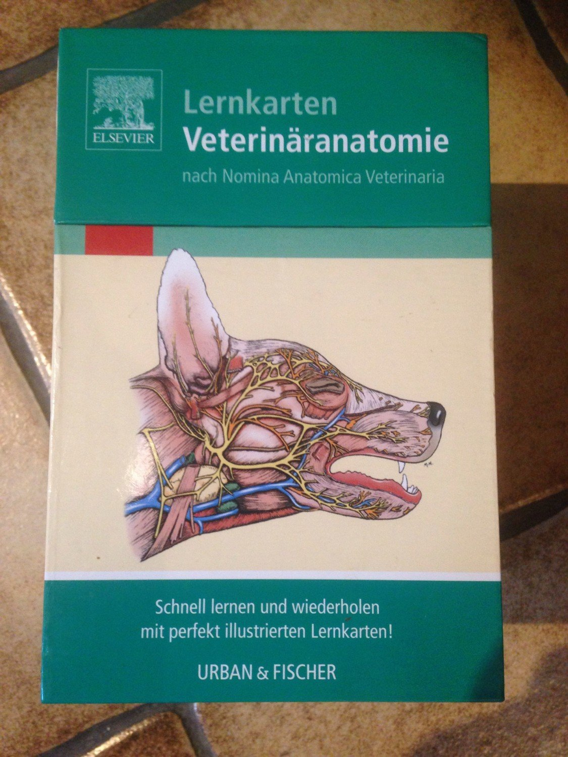 Veterinary Anatomy Flash Cards