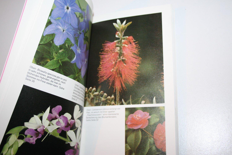 Bluhende Zimmerpflanzen Von A Bis Z Haltung Pflege Vermehrung