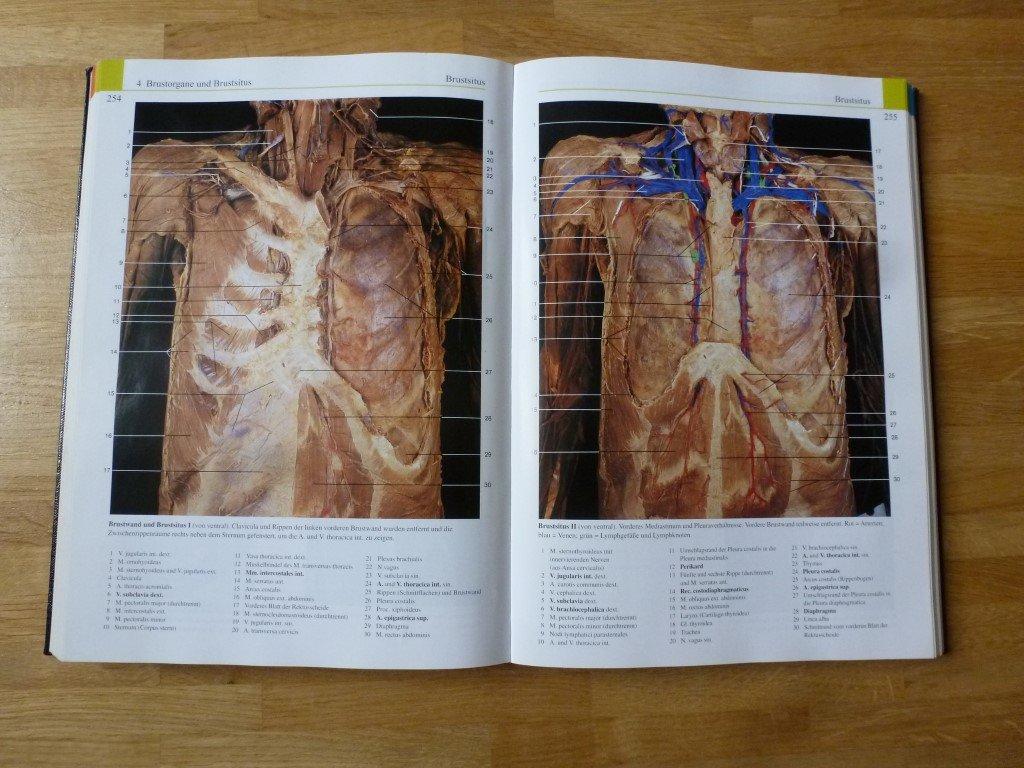 Niedlich Färben Anatomie Buch Galerie - Malvorlagen Von Tieren ...