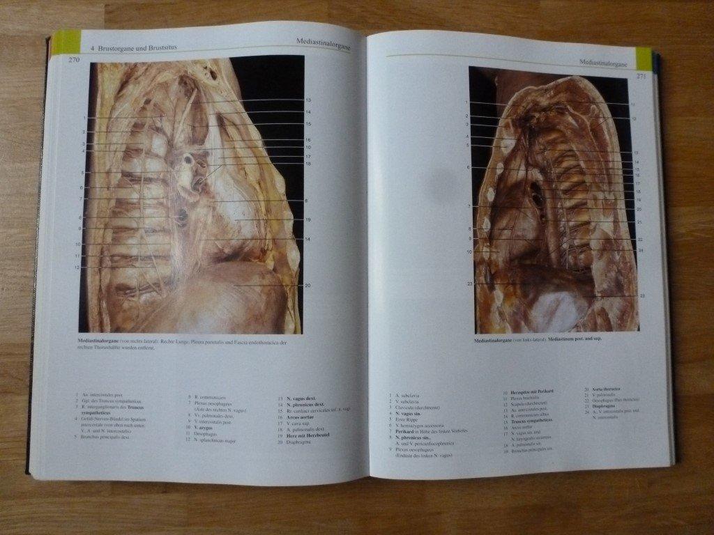 Erfreut Färben Anatomie Buch Galerie - Malvorlagen-Ideen ...