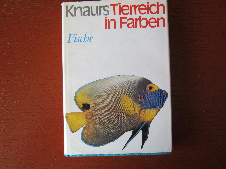Fein Regenbogen Fisch Färbung Seite Vorlage Galerie - Malvorlagen ...