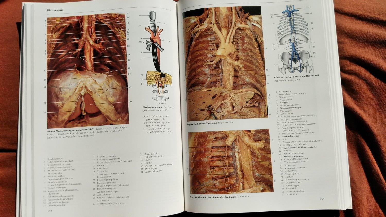 """Rohen Johannes W; Yokochi Chihiro, Anatomie des Menschen"""" – Bücher ..."""