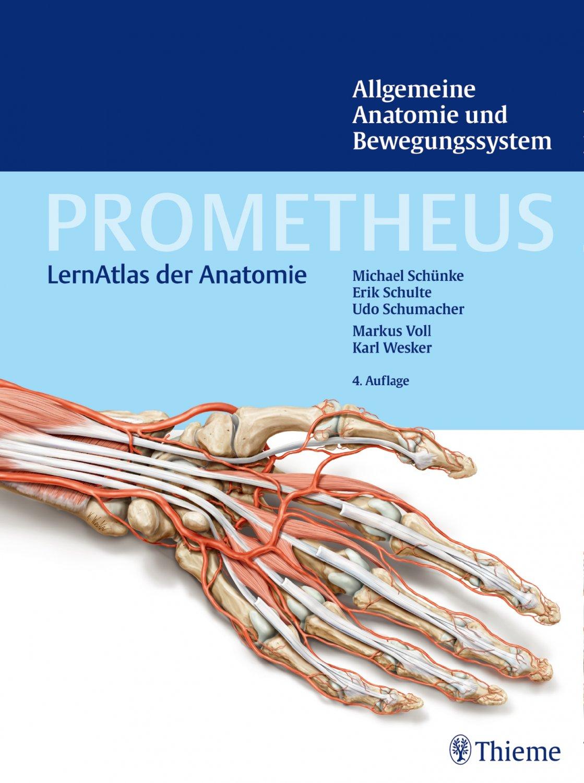 Bücher: Anatomie – gebraucht, antiquarisch & neu kaufen