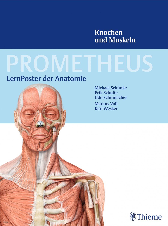 """Prometheus LernPoster der Anatomie Knochen und Muskeln"""" – Bücher ..."""
