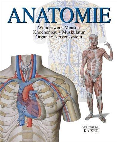 Anatomie Wunderwerk Mensch, Knochenbau Muskulatur Organe ...
