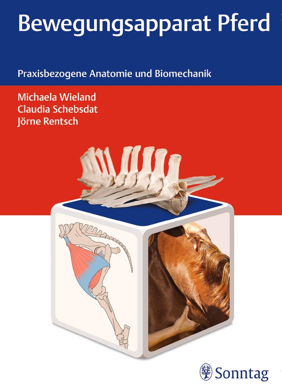 Atemberaubend Anatomie Des Golfschwungs Zeitgenössisch - Anatomie ...