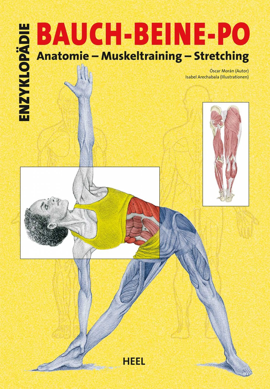 """Enzyklopädie Bauch - Beine - Po: Anatomie - Muskeltraining -"""" (Oscar ..."""